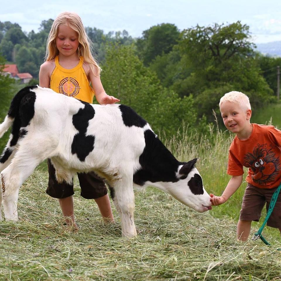 Zo života na farme